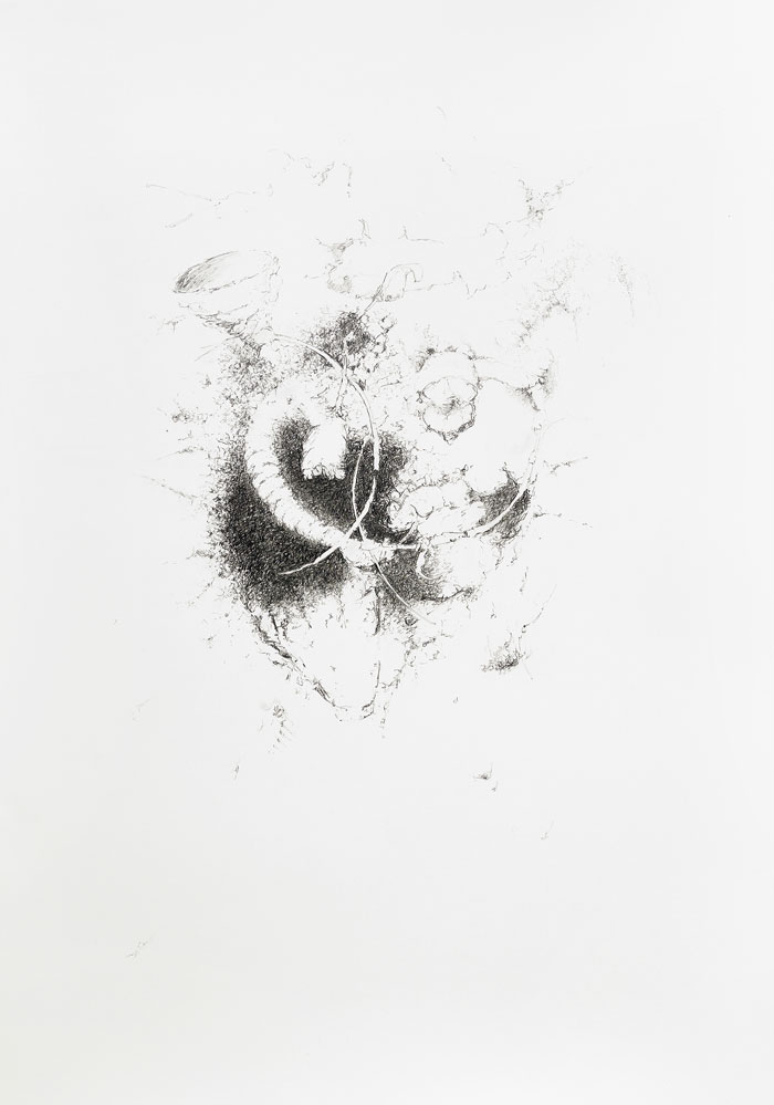 Particle from place 2017 Rur Larcher Bayeux, France. Pencil on paper, 100 x 70 cm.